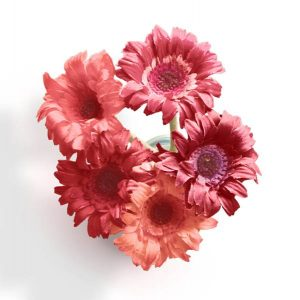 item-cover-flowers-in-jug