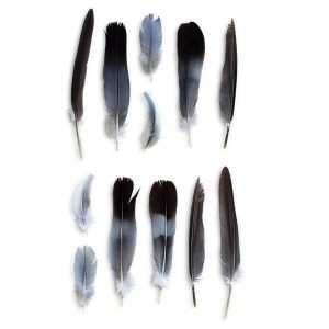 item-cover-feathers-pack
