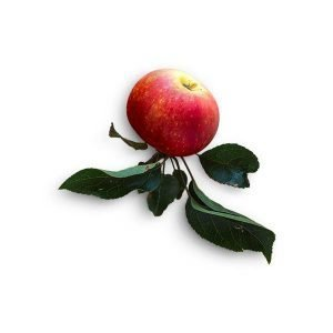 item-cover-red-apple-with-stem-1