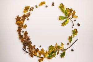 mockup-autumn-scene-11