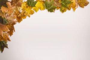 mockup-autumn-scene-12