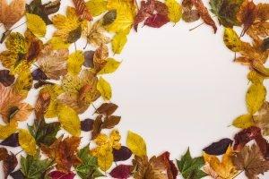 mockup-autumn-scene-7