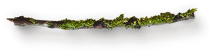 small-wooden-stick-with-moss-8